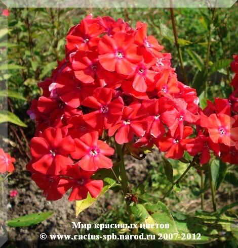 Мир красивых цветов